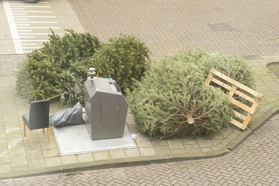 Bin with Chrsitmas trees and a pallet